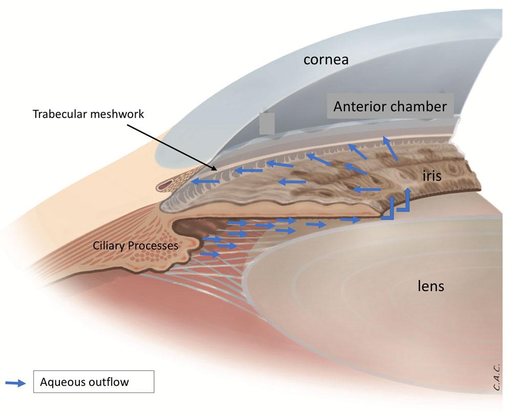 Sistema de drenaje del ojo Fig. 1